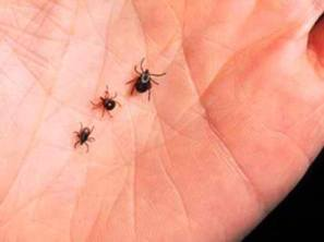 various sized ticks