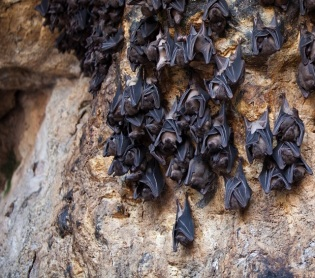 Bats sleeping in cave