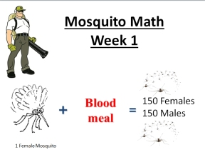 mosquito math week 1