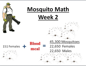 mosquito math week 2