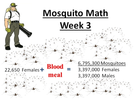 mosquito math week 3