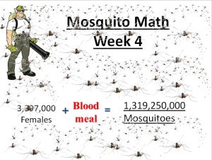 mosquito math week 4