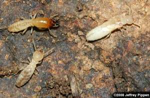 Columbia SC termite control 1