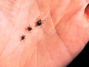 Small ticks in Columbia SC