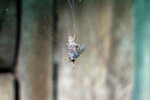 spider control Columbia SC